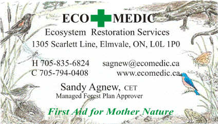 EcoMedic Business Card